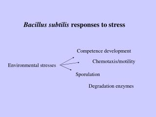 Bacillus subtilis  responses to stress