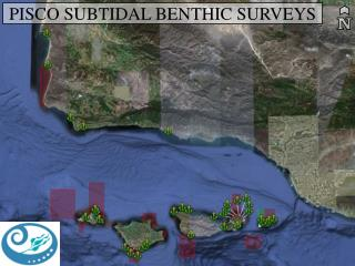 PISCO SUBTIDAL BENTHIC SURVEYS