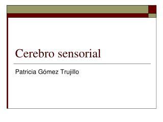 Cerebro sensorial