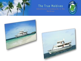 Maldives Liveaboards - The Liveaboard Diving Experience