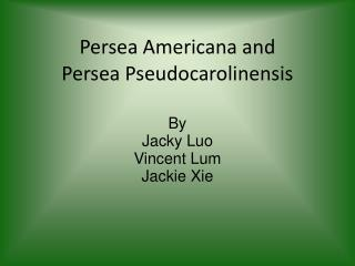 Persea Americana and  Persea Pseudocarolinensis