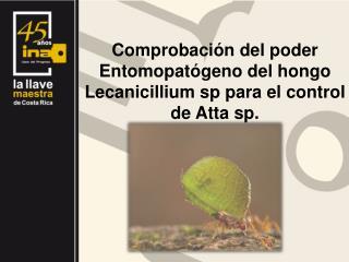 Comprobación del poder Entomopatógeno del hongo Lecanicillium sp para el control de Atta sp.