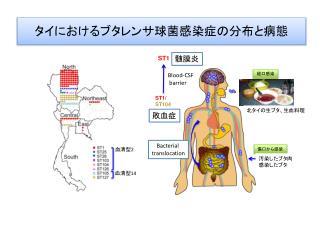 タイにおけるブタレンサ球菌感染症の分布と病態