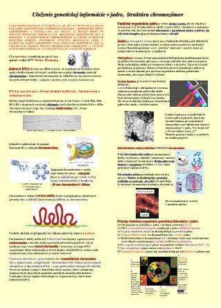 Uloženie genetickej informácie vjadre,  štruktúra chromozómov