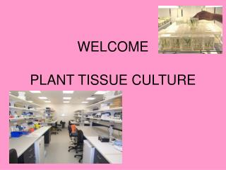 WELCOME  PLANT TISSUE CULTURE