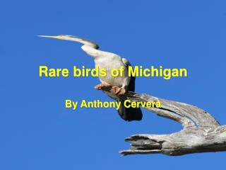 Rare birds of Michigan