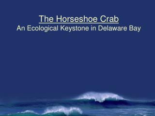 The Horseshoe Crab An Ecological Keystone in Delaware Bay