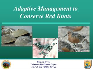 Adaptive Management to  Conserve Red Knots