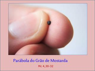 Parábola do Grão de Mostarda Mc 4,30-32