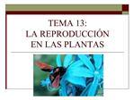 TEMA 13:  LA REPRODUCCI N  EN LAS PLANTAS