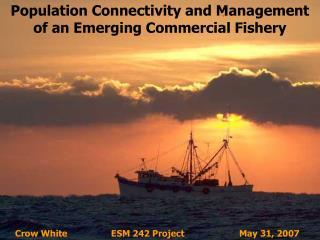 Population Connectivity and Management of an Emerging Commercial Fishery