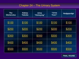 Chapter 24 – The Urinary System