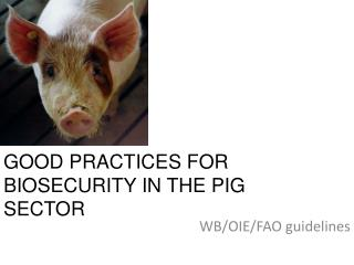GOOD PRACTICES FOR  BIOSECURITY IN THE PIG SECTOR