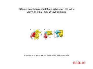 Y Hashem  et al.  Nature  000 ,  1 - 5  (2013)  doi:10.1038/nature12658