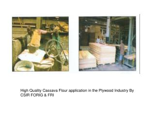 High Quality Cassava Flour application in the Plywood Industry By CSIR FORIG & FRI