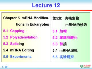 Lecture 12