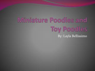 Miniature Poodles and Toy Poodles