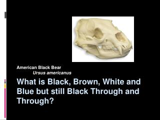 What is Black, Brown, White and Blue but still Black Through and Through?