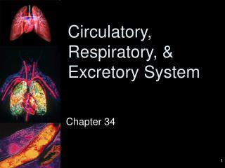 Circulatory, Respiratory, & Excretory System