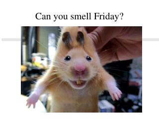 Can you smell Friday?