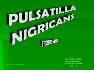 DR. NORBERTO SPINELLI DRA. NORMA E. PEREYRA AYUDANTES DE C TEDRA AMHA  -  2009 nepereyraintramed.ar