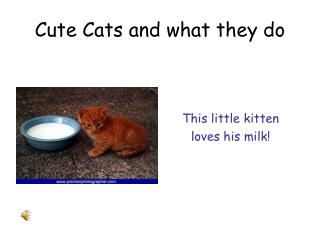 Cute Cats and what they do