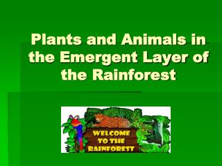 Plants and Animals in the Emergent Layer of the Rainforest