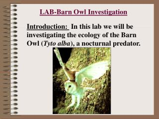 LAB-Barn Owl Investigation
