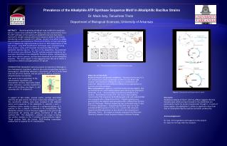 Prevalence of the Alkaliphile ATP Synthase Sequence Motif in Alkaliphilic Bacillus Strains