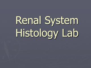 Renal System  Histology Lab