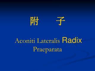 附       子  Aconiti Lateralis  Radix Praeparata