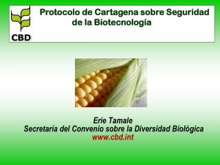 Erie Tamale  Secretaría del Convenio sobre la Diversidad Biológica  cbdt
