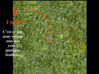 C'est ce que nous voyons sous nos yeux : quelques feuilles...