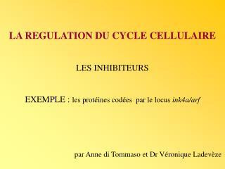 LA REGULATION DU CYCLE CELLULAIRE LES INHIBITEURS