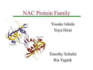 NAC Protein Family