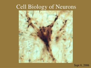 Cell Biology of Neurons