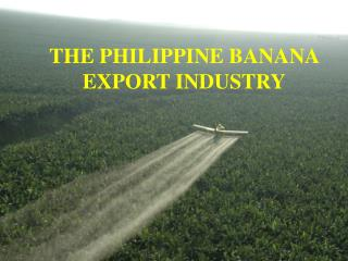 THE PHILIPPINE BANANA EXPORT INDUSTRY