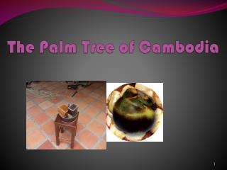 The Palm Tree of Cambodia