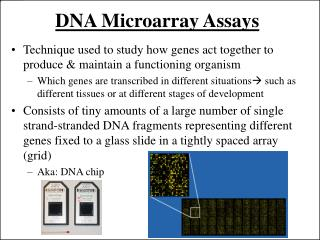 DNA Microarray Assays