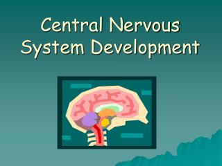 Central Nervous System Development