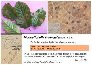 Monostichella robergei  (Desm.) Höhn.