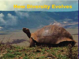 How Diversity Evolves