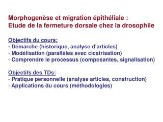Morphogenèse et migration épithéliale : Etude de la fermeture dorsale chez la drosophile