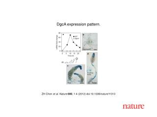ZH Chen  et al.  Nature 000 ,  1-4  (2012) doi:10.1038/nature 11313