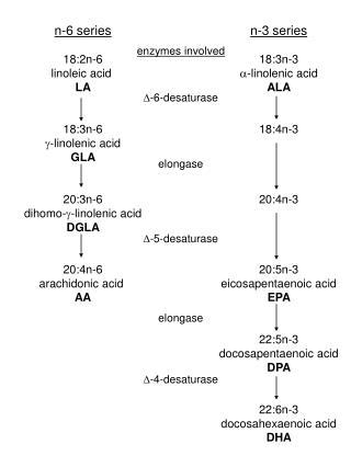 n-3 series 18:3n-3 - linolenic acid  ALA 18:4n-3 20:4n-3 20:5n-3 eicosapentaenoic acid  EPA