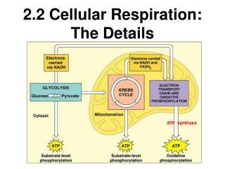 2.2 Cellular Respiration: The Details