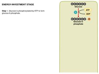 ENERGY-INVESTMENT STAGE