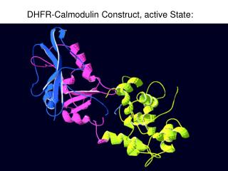 DHFR-Calmodulin Construct, active State: