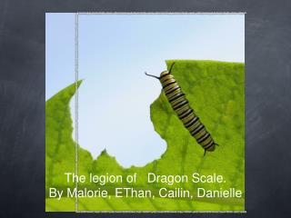 The legion of   Dragon Scale. By Malorie, EThan, Cailin, Danielle