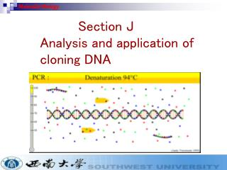 Section J  Analysis and application of   cloning DNA